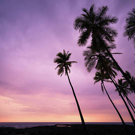 Hawaiian Palms by Ellen and Udo Klinkel