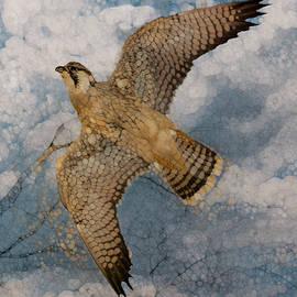 Jack Zulli - Hawk-Flight Series