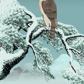 Spadecaller - Hawk on Snowy Pine