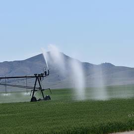 Kae Cheatham - Hay Field Irrigation