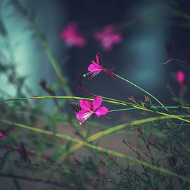 Hazy gadren by Flo Photography