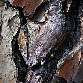 Heart Bark by Cynthia Guinn
