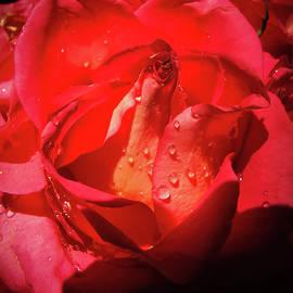 Stacie Adams - Heart of Rose