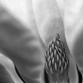 Heart Of The Magnolia Black And White by Debbie Oppermann