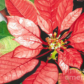 Poinsettia, Star of Bethlehem No. 2 by Barbara Jewell