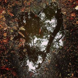 Heart Of The Wood by Rasma Bertz