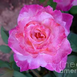 Marlene Rose Besso - Sedona Heart Rose