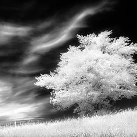 Heavenly Places - Dan Jurak