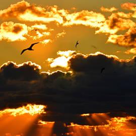Dianne Cowen - Heavenly Sunrise