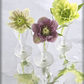 Hellebore Trio by Robert Murray