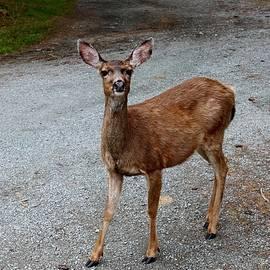 Hello Deer  by Christy Pooschke