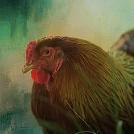 Hen by Eva Lechner