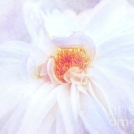 Anita Pollak - Here Comes the Bride - A Beautiful White Dahlia