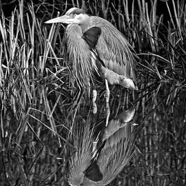 Allan Van Gasbeck - Heron Reflection Black and White.