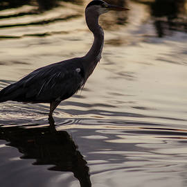 Heron Sunset by Miguel Winterpacht