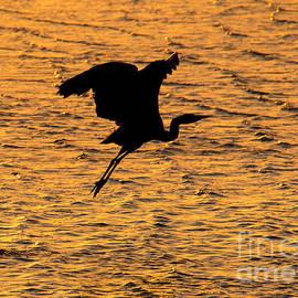 Heron Sunset - Mike Dawson