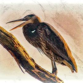 Heron Yawns  by Ola Allen