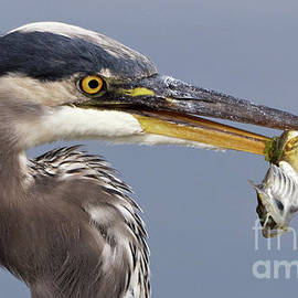 Herons Appetizer by Sue Harper