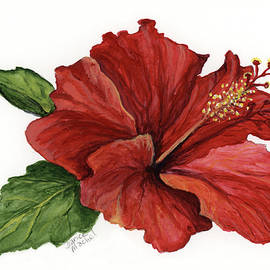 Hibiscus Flower by Darice Machel McGuire