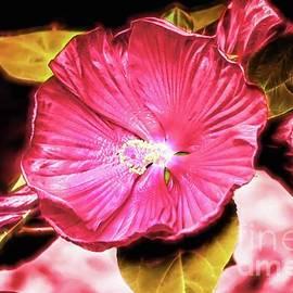 Tina LeCour - Hibiscus Flower