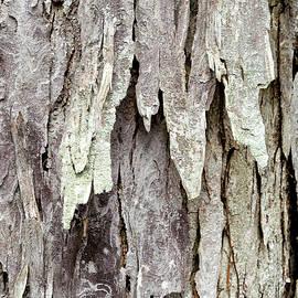 Christina Rollo - Hickory Tree Bark Abstract