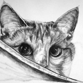 Hide N Seek by Susan A Becker