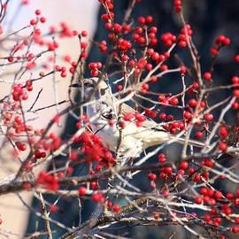 Hiding Mockingbird by Karen Silvestri
