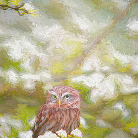 Hiding Owl - Painting by Ericamaxine Price