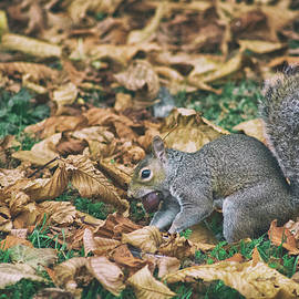 Martin Newman - Hiding the Nut