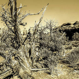 Broken Soldier - High Desert