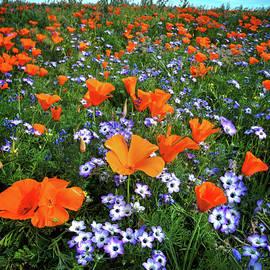 Lynn Bauer - High Desert Wildflowers