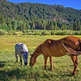 Lynn Bauer - High Sierra Horses