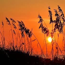 Hilton Head Sunrise by Mary Ann Artz