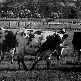 Miroslava Jurcik - History Of Farming 1900s