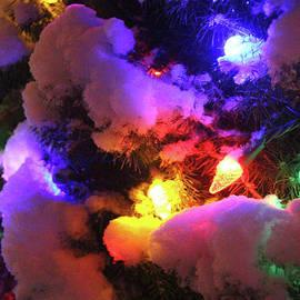 Holiday Lights-4278