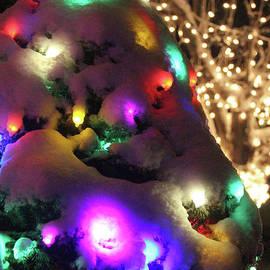 Holiday Lights-4298