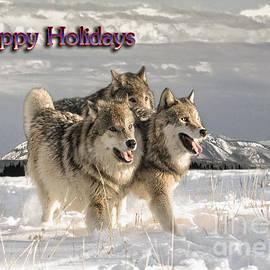 Wildlife Fine Art - Holiday Pack
