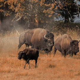 Home On The Range by Cliff Wassmann