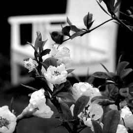 HOMETOWN Series- BW Garden Spot by Arlane Crump