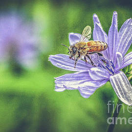 Honey Bee And Flower by Eleanor Abramson