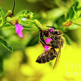 Honey Bee at Dinner  by Kay Brewer