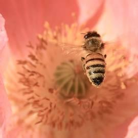Chris Berry - Honeybee Descending