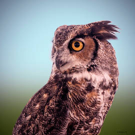 Brian Wallace - Hoot Owl - Great Horned Owl