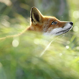 Roeselien Raimond - Hope - All Good Things Come From Above
