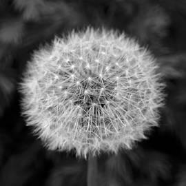 Richard Andrews - Hopes and Dreams B n W