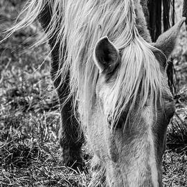 Horse 2 Black And White by Karen Saunders