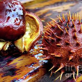 Horse Chestnut Aesculus by Daliana Pacuraru