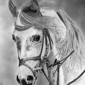 James Schultz - Arabian Horse Drawing