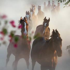 Horse Herd Coming Home by Ekaterina Druz