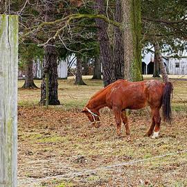 William Sturgell - Horse in the Pasture